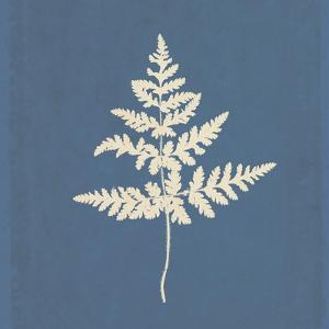 White Leaf on Blue 01 by Tom Quartermaine