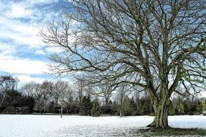 Winter Tree in Snow by Tom Quartermaine