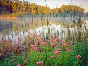 Joe Pye Weed at Sndyers Bend Park, Iowa Missouri River by Tom Till