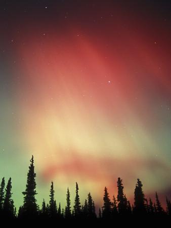 Aurora Borealis, Northern Lights, Alaska Range Mountains, Alaska, USA by Tom Walker