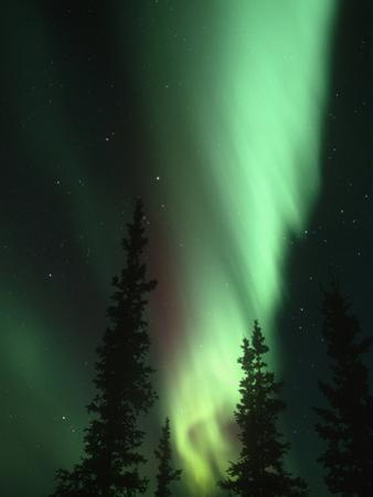 Aurora Borealis or Northern Lights, Alaska Range, Alaska, USA by Tom Walker