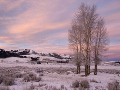 Lamar Valley in Winter, Yellowstone National Park, Wyoming, USA by Tom Walker
