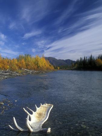 Moose Antler in the Hunts River, Brooks Range, Kobuk National Park, Alaska, USA by Tom Walker