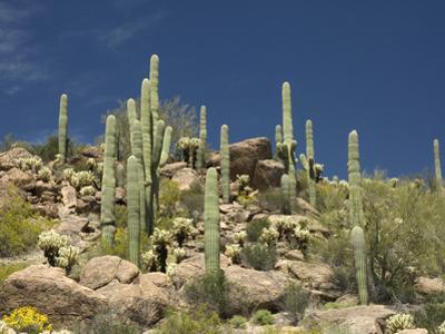 Sonoran Desert, Arizona, USA by Tom Walker
