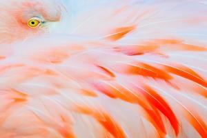 Flamingo by Tom Winstead