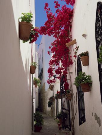 Bougainvillea in a Narrow Whitewashed Street in Upper Village, Mojacar, Almeria, Andalucia, Spain