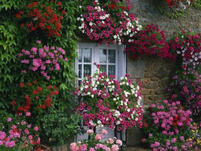 Farmhouse Window Surrounded by Flowers, Ille-et-Vilaine, Brittany, France, Europe