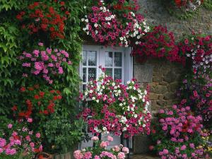 Farmhouse Window Surrounded by Flowers, Ille-et-Vilaine, Brittany, France, Europe by Tomlinson Ruth