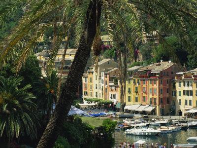 Harbour from Hillside, Palm-Tree in Foreground, Portofino, Portofino Peninsula, Liguria, Italy
