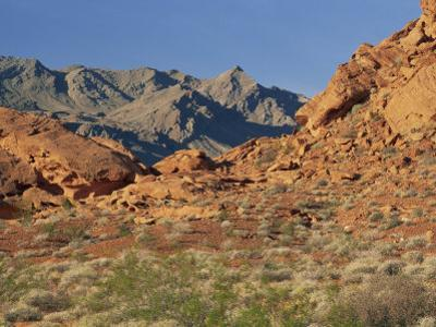 Red Sandstone Rocks, in the Valley of Fire State Park, Nevada, USA