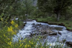 Quila Quina River Surrounded by Retama Bushes in Bloom and Caoihue Trees by Tommy Heinrich