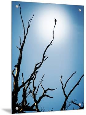 Bird Perched on Branches Reaching to the Sky by Tommy Martin