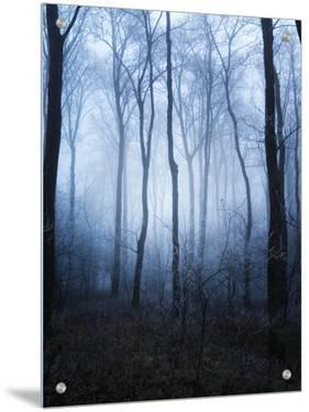 Forest and Brush in Dense Fog by Tommy Martin