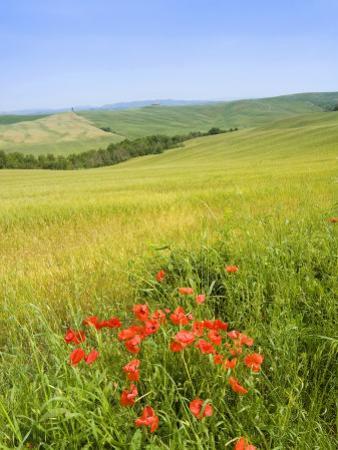 Crete Senesi Area, Near Asciano, Siena Province, Tuscany, Italy, Europe by Tondini Nico