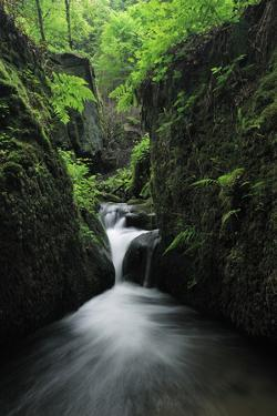 Halerbach - Haupeschbach, a Small Stream Flowing Past Moss Covered Rocks in Forest, Luxembourg by Tønning