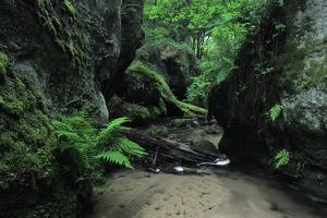 Halerbach - Haupeschbach Flowing Between Moss Covered Rocks with Ferns (Dryopteris Sp.) Luxembourg by Tønning