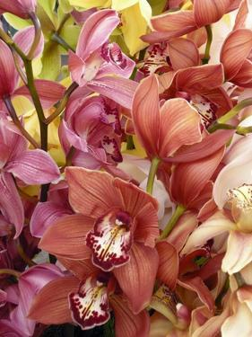 Mixed Orchids by Tony Craddock