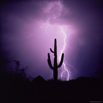 Cactus Silhouetted Against Lightning, Tucson, Arizona, USA