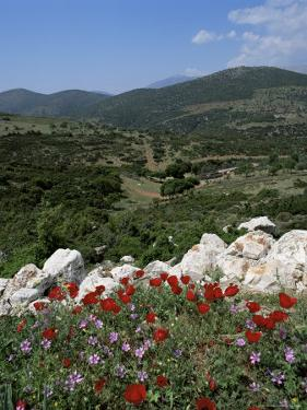 Flowers and Landscape, Greece by Tony Gervis