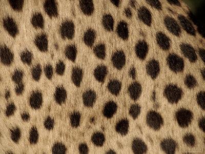 Cheetah Fur Detail