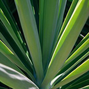 Botanicals VIII by Tony Koukos