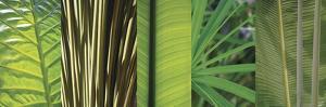 Eco Composition I by Tony Koukos