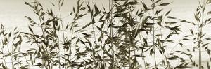 Patmos Organics Vii by Tony Koukos