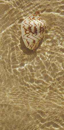 Ripple Shell II by Tony Koukos