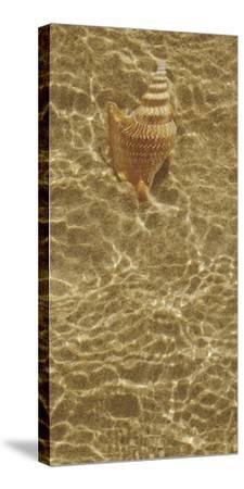 Ripple Shell III by Tony Koukos