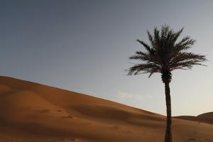 Sahara Ii by Tony Koukos