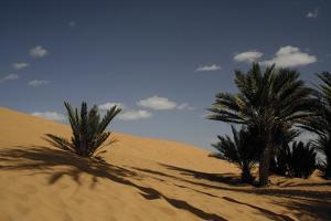 Sahara Iii by Tony Koukos