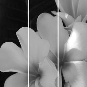 Tropical Bloom Iii by Tony Koukos