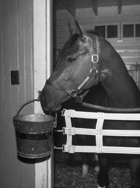 Citation in Stall by Tony Linck
