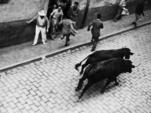 Running of the Bulls for Fiesta of San Ferman by Tony Linck