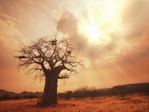 Baobab Life by Tony Pazan