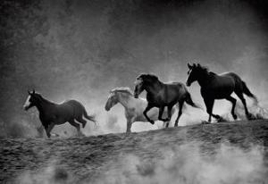 Run with the Wind by Tony Stromberg