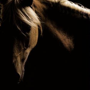 Spirit Horse by Tony Stromberg