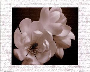 Winter Magnolia II by Tony Stuart