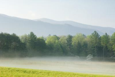 Meadow with Fog, Mountain Range in Background
