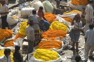 Armenia Ghat Flower Market, Kolkata (Calcutta), West Bengal, India, Asia by Tony Waltham