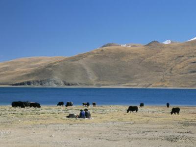 Yaks Graze by Yamdrok Lake Beside Old Lhasa-Shigatse Road, Tibet, China