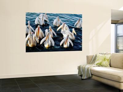 Pelicans on Lake Tana at Mango/Pelican Lake