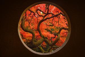Autumn Sense by Tony Xu