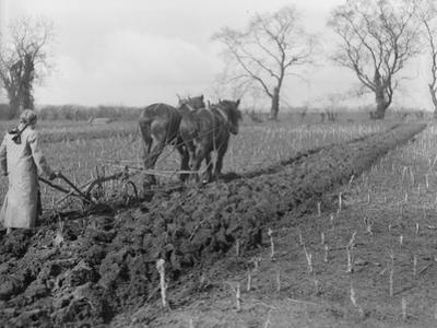 Tilling the Soil by Topical Press Agency