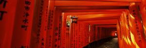 Torii Gates of a Shrine, Fushimi Inari-Taisha, Fushimi Ward, Kyoto, Honshu, Japan