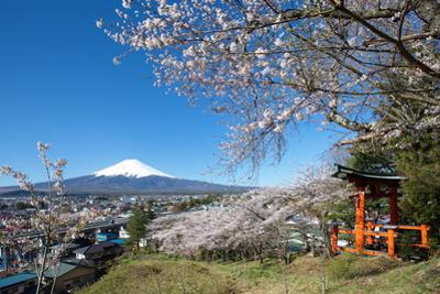 Mountain Fuji in Spring ,Cherry Blossom Sakura by Torsakarin