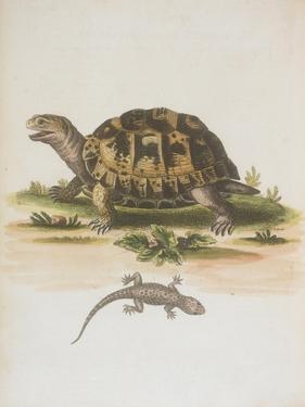 Tortoise and Lizard