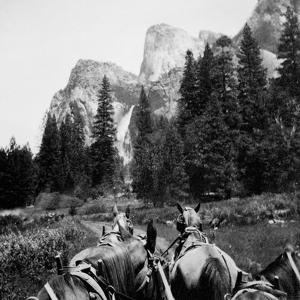 Tourist Photo from Horse-Drawn Wagon in Yosemite Valley, Ca. 1900
