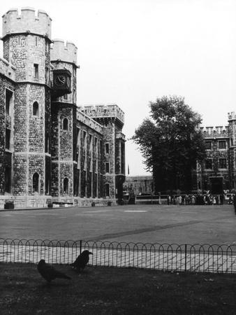 https://imgc.allpostersimages.com/img/posters/tower-of-london-ravens_u-L-Q1071GD0.jpg?p=0
