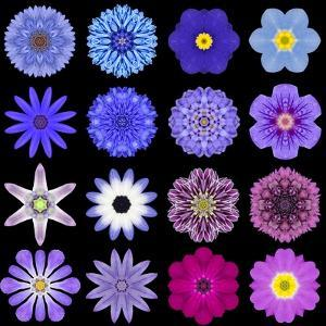 Big Collection of Various Blue Pattern Flowers by tr3gi